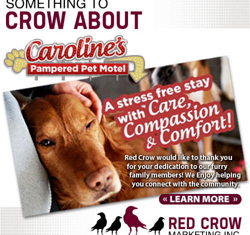 Something to Crow About - Caroline's Pampered Pet Motel